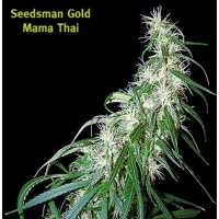 Mama Thai Regular Cannabis Seeds | Seedsman