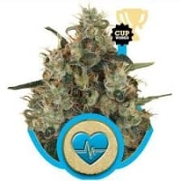 Medical Mass Feminised Cannabis Seeds | Royal Queen Seeds