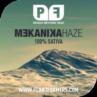 Mekanika Haze Regular Cannabis Seeds | Plantformers