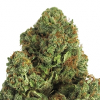 Midnight Mass Feminised Cannabis Seeds | Heavyweight Seeds