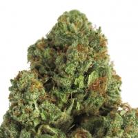 Midnight Mass Feminised Cannabis Seeds | Heavyweight Seeds