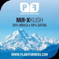Mr-X Kush Feminised Cannabis Seeds | Plantformers