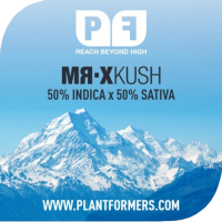 Mr-X Kush Feminised Cannabis Seeds | Plantformers