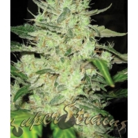 Next of Kin Feminised Cannabis Seeds | Superstrains
