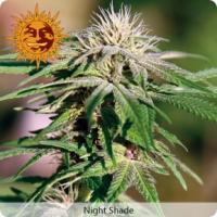 Barney's Farm Night Shade Feminised Cannabis Seeds For Sale