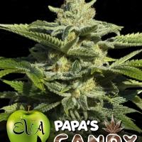 Papa's Candy Feminised Cannabis Seeds
