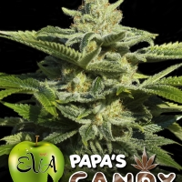 Papa's Candy Feminised Cannabis Seeds