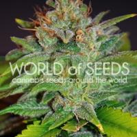Skunk 47 Feminised Cannabis Seeds | World of Seeds