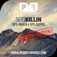 SOG Killin Feminised Cannabis Seeds | Plantformers