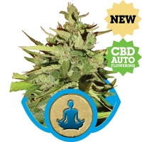 Stress Killer CBD Auto Flowering Feminised Cannabis Seeds | Royal Queen Seeds