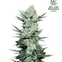 Tangie'matic Feminised Cannabis Seeds | Fast Buds