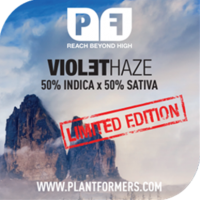 Violet Haze Feminised Cannabis Seeds | Plantformers