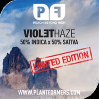 Violet Haze Feminised Cannabis Seeds
