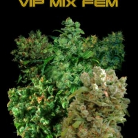 VIP Female Mix Feminised Cannabis Seeds