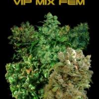 VIP Female Mix Feminised Cannabis Seeds