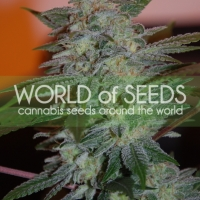 Yumbolt 47 Feminised Cannabis Seeds | World of Seeds