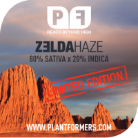 Zelda Haze Feminised Cannabis Seeds
