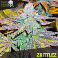 Zkittlez Feminised Cannabis Seeds | Black Skull Seeds